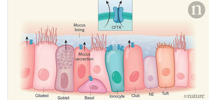 ionocytesetautrescellulespoumonnature