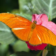 istock-papillon_0