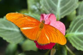 istock-papillon